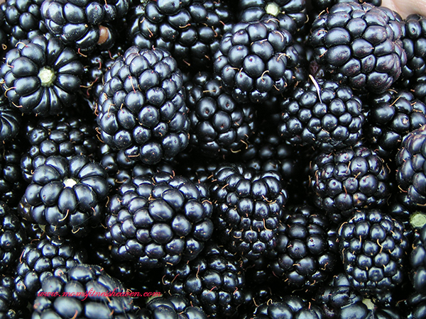 blackberries momsfitnessheaven