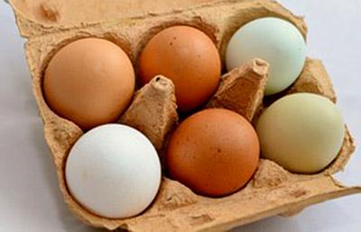 egg l